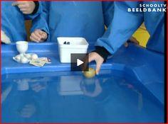 Beeldbank: drijven en zinken bij de watertafel. Flip en drijven Water Theme Preschool, Professor, Ga In, Preschool Lessons, Swimming Pools, Teaching, Education, Projects, Pirates