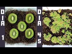 How to Grow a Huge Blueberry Harvest Small Vegetable Gardens, Home Vegetable Garden, Fruit Garden, Edible Garden, Garden Plants, Planter Garden, Regrow Vegetables, Container Gardening Vegetables, Growing Vegetables