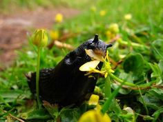 Garden Pest Control entails the regulation and control of pests, which is a type of species that are damaging to plants. Garden pests diminish the quality and Garden Web, Lawn And Garden, Garden Design, Balcony Garden, Landscape Design, Slugs In Garden, Garden Pests, Garden Insects, Garden Slug