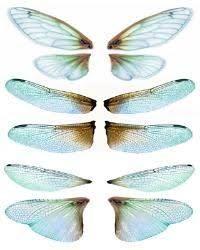 OOAK Artist Emporium - Fairy Wing Prints, many wonderful choices for wings! Diy Fairy Wings, Diy Wings, Dragonfly Wings, Butterfly Wings, Insect Art, Paperclay, Vintage Paper Dolls, Doll Tutorial, Fairy Art