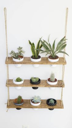 hanging plants Home - TriBeCa Trio Pot Shelf / Hanging Shelves / Planter Shelves / Floating Shelves / Three Tiered Shelf Plant Shelves, Hanging Shelves, Floating Shelves, Hanging Baskets, Shelves With Plants, Floating Plants, Hanging Racks, Diy Hanging, Hanging Plants