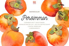 Watercolor Persimmon Collection is a pack of 6 persimmons (hand-painted from life and then scanned at 1200 dpi and cleaned out of background), as well as Persimmon Fruit, Orange Fruit, Botanical Illustration, Graphic Illustration, Illustrations, Citrus Image, Citrus Trees, Fruit Arrangements, Botanical Prints