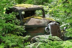 Old Chevy in the Forest by Larry Myhre, via Flickr