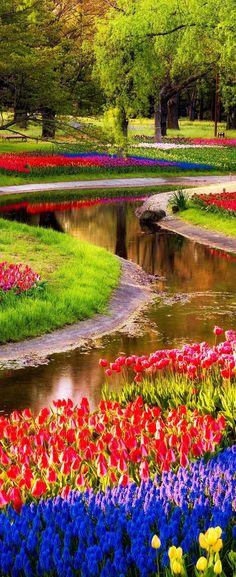 Keukenhof Bulb Fields | netherlands