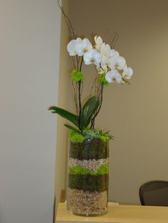GARDENVIGNETTES.COM Living Floral Arrangement.  Orchid with succulent under plantings I did for a client's office. www.gardenvignettes.com