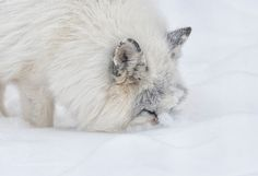 Into Winter... by djlparent99 #animals #animal #pet #pets #animales #animallovers #photooftheday #amazing #picoftheday