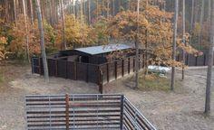 Trzynaście danieli zamieszkało w nowej zagrodzie wybudowanej na terenie nadleśnictwa Poddębice. Docelowo pojawi się w niej czterdzieści zwierząt.