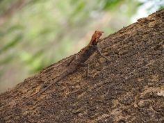 Jungles and Wildlife in Goa