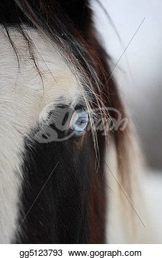"""blue eye of a gypsy horse""- Horse Stock Photo from Gograph.com Gypsy Horse, Horse Horse, Horses, Photo Blue, Horse Photos, Art Images, Clip Art, Stock Photos, Eyes"