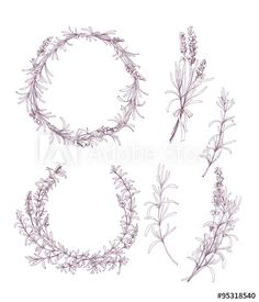 Vector set of ink hand drawn lavender illustration in lilac color. Vintage collection of lilac lavender cosmetics sketch isolated on white