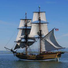 141 Tall Ships In Redwood City Adventure! Sail Boats, Tug Boats, Classic Sailing, Hms Victory, Full Sail, Ship Paintings, Pirate Ships, Sail Away, Navy Ships