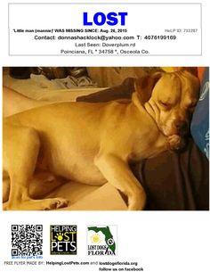 Lost Dog - Mix - Poinciana, FL, United States