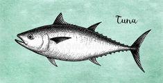 Ink sketch of tuna vector illustration design. Fish Art, Retro, Whale, Sketch Ink, Drawings, Floral, Illustration, Vectors, Animals