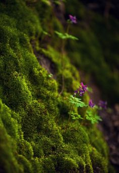 Nature is a large. Nature is a not only science its part of our life. Human can't lives without nature. Some people lives with nature. All Nature, Amazing Nature, Moss Garden, Succulent Planters, Succulents Garden, Hanging Planters, Planting Flowers, Magical Forest, Walk In The Woods