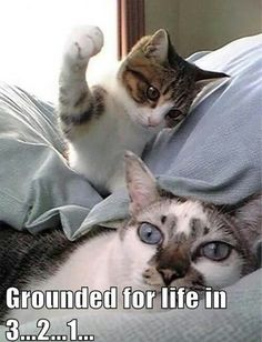 getting grounded