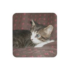Looking Around #Drink #Coasters!  #Cute #kittens galore are in my #zazzle #store!  http://www.zazzle.com/conquestkitty*