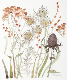 Meadow with Thistle & Crocosmia - Angie Lewin Watercolor Plants, Watercolor Drawing, Painting & Drawing, Watercolor Paintings, Watercolours, Art And Illustration, Watercolor Illustration, Illustrations, Angie Lewin