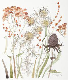 Meadow with Thistle & Crocosmia
