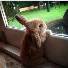 Learn About Pet Rabbit – Gloria Love Pets - Cutest Baby Animals Baby Animals Super Cute, Cute Baby Bunnies, Cute Little Animals, Cute Funny Animals, Cute Babies, Bunny Bunny, Bunny Rabbits, Funny Bunnies, Dwarf Bunnies