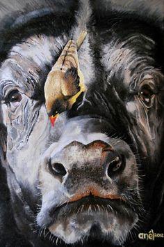 Buffalo (oil)