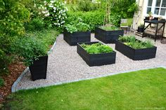 Vegetable Garden Layout Mistakes to Avoid Gravel Garden, Veg Garden, Garden Edging, Garden Pots, Pea Gravel, Herb Garden Design, Vegetable Garden Design, Outdoor Landscaping, Outdoor Gardens