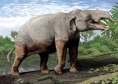 Carl Buell - Phiomia  serridens lived in what is now Northern Africa some 36 to 30 million years ago