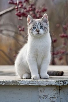 (notitle) - ❤️ Cats - Garden Gatos and Flowery Felines - tierbabys Cute Cats And Kittens, I Love Cats, Crazy Cats, Cool Cats, Kittens Cutest, Ragdoll Kittens, Tabby Cats, Funny Kittens, Bengal Cats