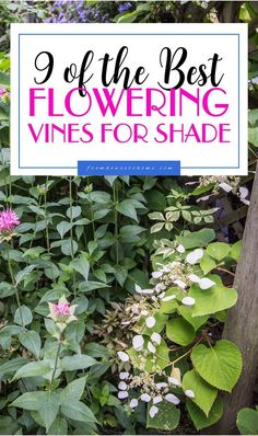This list of flowering vines for the shade is the BEST! I love that these are all perennial and non-invasive plants. I need to hide the view of my neighbor�s shed and now I know what to plant. Definitely pinning! #vines #shadeplants #perennials #gardening