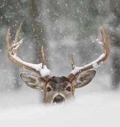 ❥ anim, antler, winter, wild ones, snow, deer hunting, christma, outdoor life, bang bang