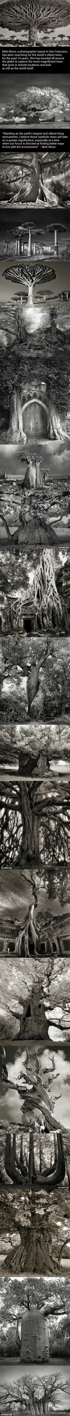 Woman Spends 14 Years Photographing World's Oldest Trees - 9GAG