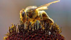 El misterio de la muerte de las abejas resuelto