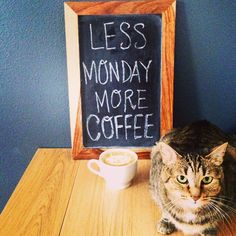 Less Monday More COFFEE! (plus a cat)