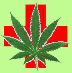 Medical Marijuana Menu Highlight: King Kush « Humboldt Relief: Welcome To The Garden