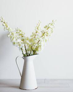 White Delphinium Flo