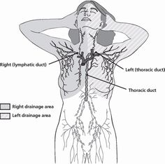 3 reasons to move your lymph: 3 ways to do it! Breast Cancer Survivor, Breast Cancer Awareness, Lymphatic Drainage Massage, Radiation Therapy, Lymph Nodes, Lymphatic System, Lymphatic Filariasis, Lymph Fluid, Modern Hippie