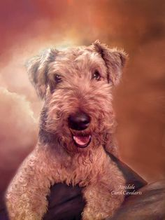 Airedale by Carol Cavalaris. A loyal and loving friend forever. This painting of an Airedale Terrier is from the Dogs and Cats collection of art by Carol Cavalaris.