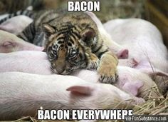 Bacon bacon everywhere!