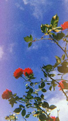 Ideas Flowers Photography Wallpaper Inspiration Beautiful For 2019 Tumblr Wallpaper, Wallpapers Tumblr, Pretty Wallpapers, Nature Wallpaper, Fall Wallpaper, Wallpaper Quotes, Aztec Wallpaper, Phone Backgrounds Tumblr, Watercolor Wallpaper