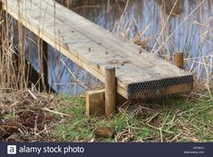 Stock Photo - Construction of a simple plank bridge allowing access across a water filled ditch or dyke. Plank covered in wire netting Natural Swimming Ponds, Natural Pond, Pond Bridge, Garden Bridge, Rustic Outdoor Structures, Wood Walkway, Path Ideas, Fence Landscaping, Pergola