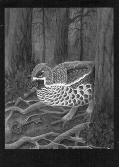 hazel grouse art - Google Search