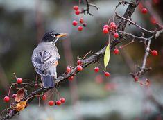 Birdphoto.jpg (690×507)