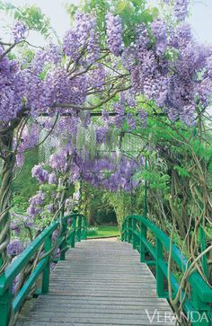 This Japanese bridge draped with pendant wisteria blossoms proved a favorite subject for Monet. - HouseBeautiful.com