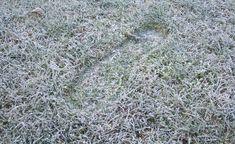 Trittspuren bleiben im gefrorenen Rasen lange sichtbar