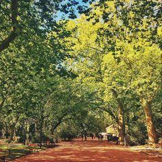 mon jardim  #parquedcarlos #caldasdarainha #oeste #portugal #gerador #oestealive #vsco_portugal