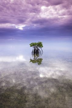 A lone red mangrove tree stands out in the shallow waters of Biscayne Bay, near Miami, Florida. Seagrasses provide an interesting texture to the foreground as the clouds and their reflections playfully surround the tree.