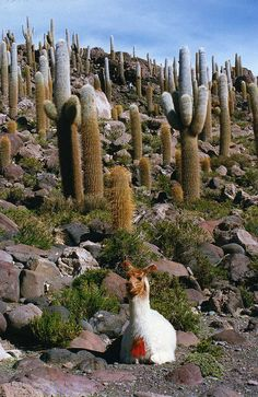 A native of Salar de Uyuni, Bolivia