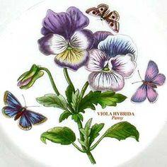 Botanic Garden Pansy