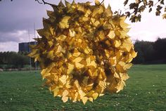 What an interesting piece made by Goldsworthy with a bunch of fallen leaves in1986.  This would have been very delicate and intricate work, and very difficult to put together without breaking the leaves!