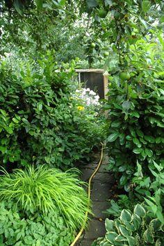 """Wild und ein wenig verwunschen wirkt der Garten an manchen Stellen. Christian mag seinen Sammlergarten mit vielen unterschiedlichen Pflanzen: """"Wer es akkurater haben möchte, darf nur ein oder zwei Sorten pflanzen. Ich mag es aber so lieber"""", erzählt er. #homestory #homestoryde #home #interior #design #inspiring #creative #craft #DIY #garten #pflanzen #christian #blumen"""