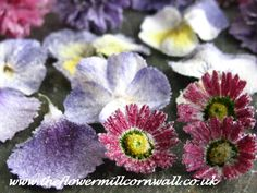 Crystallised flowers from www.theflowermillcornwall.co.uk